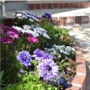 我が家の花壇